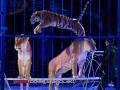 CircusProbstOldenburg2016_44